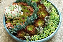 Vetplante potte