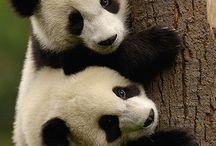 perfect pandas / by Kristin D