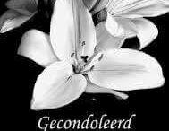 gecondoleerd/veel sterkte