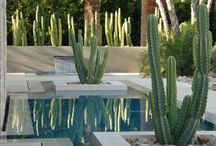 Garden: Palm Springs landscaping