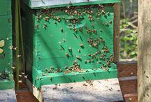 bees, hummingbirds,  & butterflies