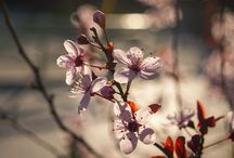 Nature Photography / Photos of nature