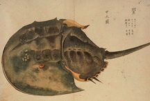 horseshoe crab / by batmoon