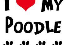 ~Jax my poodle~ / by Janine Durham