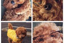Puppy love / by Amanda Nelson