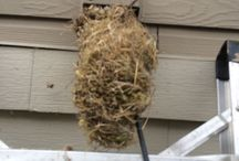 Birds in the Burbs! Round Rock TX / Apparently birds just love to nest in Round Rock exterior dryer vents.  Call us @ 512-270-8388 or visit BetterDryerVent.com/austin-tx
