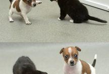 Cute animals ☺