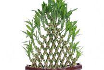 bambusik