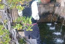 Beautiful Kirstenbosch