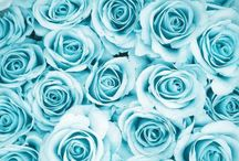 all things in shades of blue