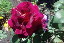 Flower Magic / #flowers