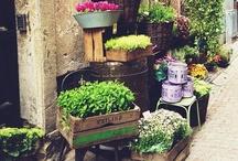 Tuin / Inspiratie voor tuinen