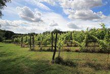 Biodynamics / #Biodynamic, #organic, and #green #vineyard #farming and #wine production.