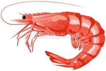 crustaces poissons