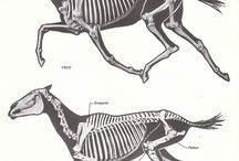 skeletons :3