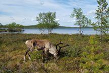 Sevettijärvi Finnish Lapland