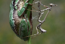 reptiles and amphibians / by Debbie Kobs