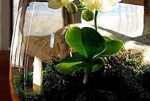 Indoor Plants / Trees and potted indoor plants