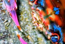 Hawaiian Rainbow Crab