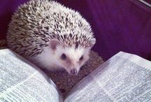 Pets Caught Reading