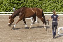 Physio Pferd