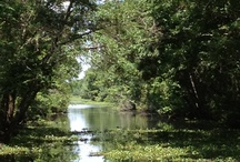 Louisiana Bayou / by Serena Ehrlich