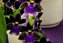 Kitti Virág Csoport