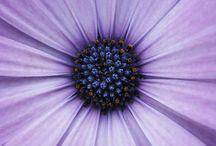 Purple Passion / by Belle West