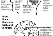 Autism Neurology