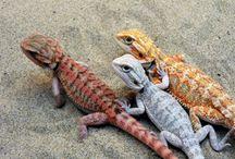 • Lizardz •