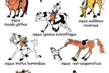 Horse species