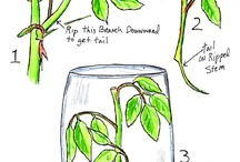 Advanced Gardening / Propagating, cloning, hydroponic gardening / by Kim Jaques