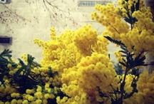 Codo a Codo <3 Yellow