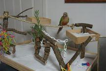 Bird playgyms