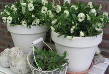 Blomster til terasse