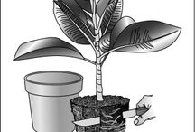 hage - planter/lurt