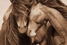 Horses Birthday / For the love of all things equine. Join us for our Horses Birthday Fête August 3rd and 4th.