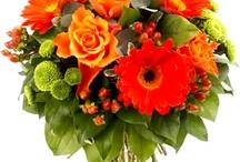 Fleurs oranges / Le orange : joie, créativité, communication, sécurité, optimisme.
