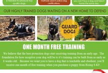 Trained Protection Dogs For Sale / Have a peek at this website http://risingsk9.com/ for more information on Personal Protection Dogs. A good Personal Protection Dogs is a truly fantastic way of securing your home and for many is the single most effective form of defense against a break-in. The first part of training is for the owner to understand the difference between a guard dog and an attack dog.  Follow Us : http://schutzhunddogsforsale.bravesites.com/