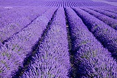 We love purple