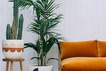 Patterned House Plants