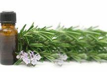 Okaliptus Yaprağı / Okaliptus Yaprağının Faydaları ve Kullanımı Hakkında