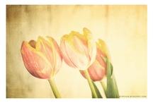 my photos / http://redesiuk.blogspot.com
