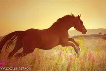. ► Cavallo