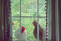 my love........chickens / by Kathy Woody