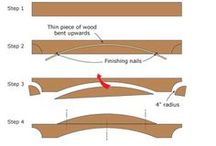 wood ergelia