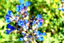 My Photos - Nature