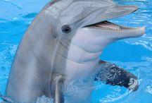 Océano del delfín
