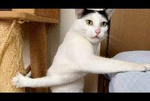 Cats Videos