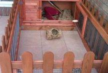 Bunny homes